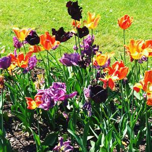 В Германии кругом зелень и цветы