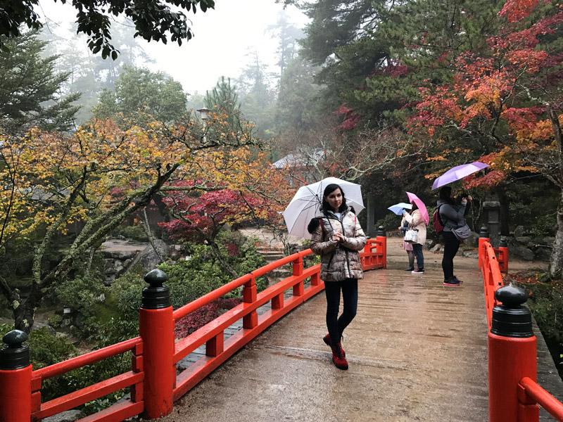 Япония в период красных кленов Момидзи